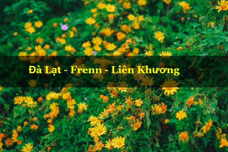 Hoa dã quỳ theo hướng frenn Đà Lạt