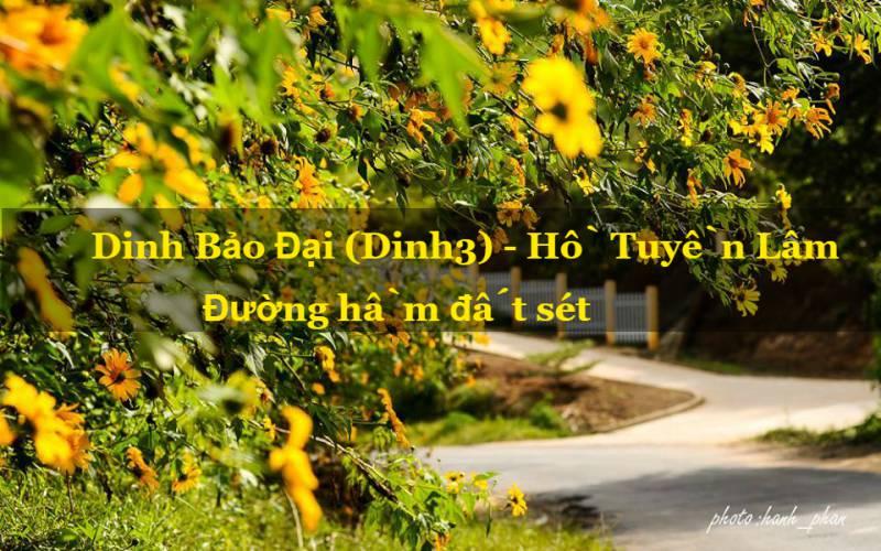 hoa dã quỳ hướng dinh 3 thành phố đà lạt