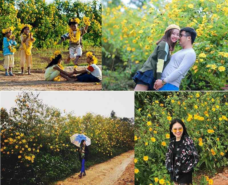 Mùa hoa Dã Quỳ ở Đà Lạt là dịp tuyệt vời để chứng minh tình yêu của bạn