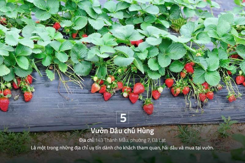 Vuon dau chu hung da lat