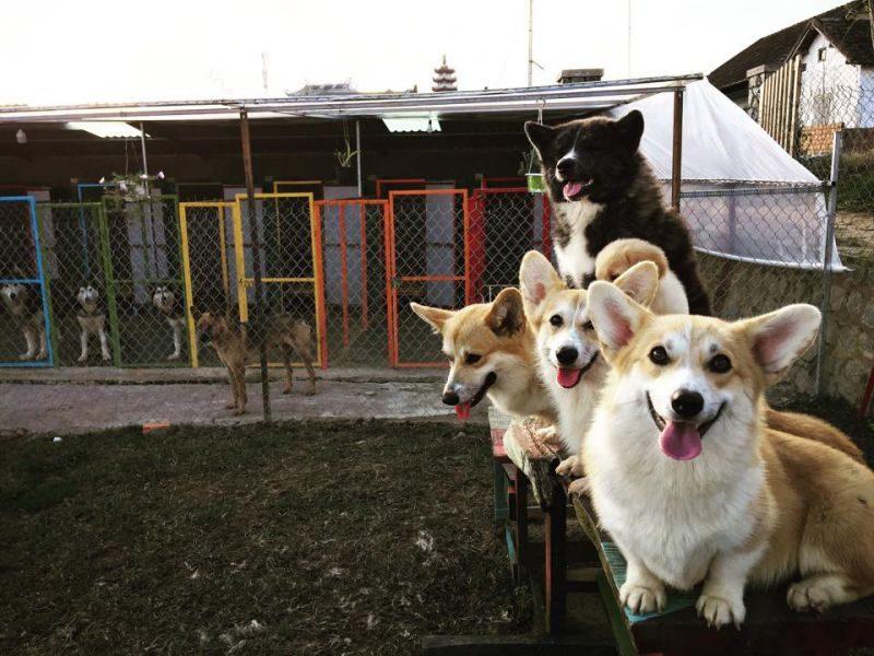Tour du lịch Đà Lạt 1 ngày mới năm 2020 sẽ đi trang trại cún