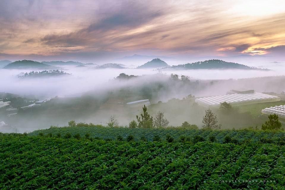 những vườn rau xanh trong làn sương buổi sáng