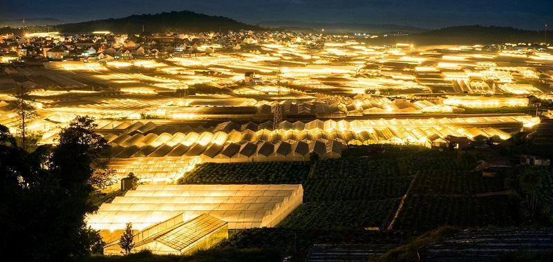 Làng hoa Thái Phiên lung linh trong ánh đèn vàng về đêm