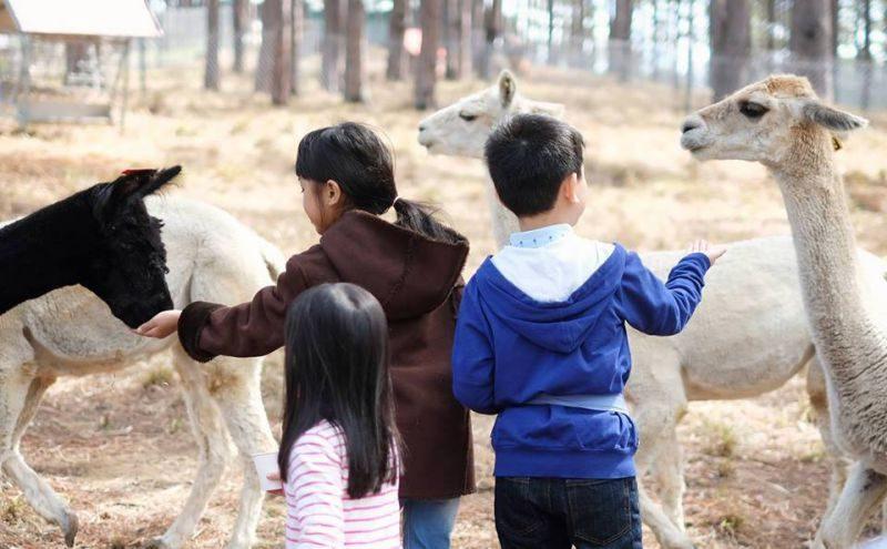 Zoodoo Đà Lạt nổi tiếng với những động vật thân thiện.