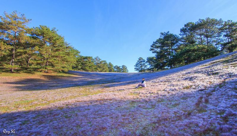Ảnh đồi cỏ hồng ở Đà Lạt