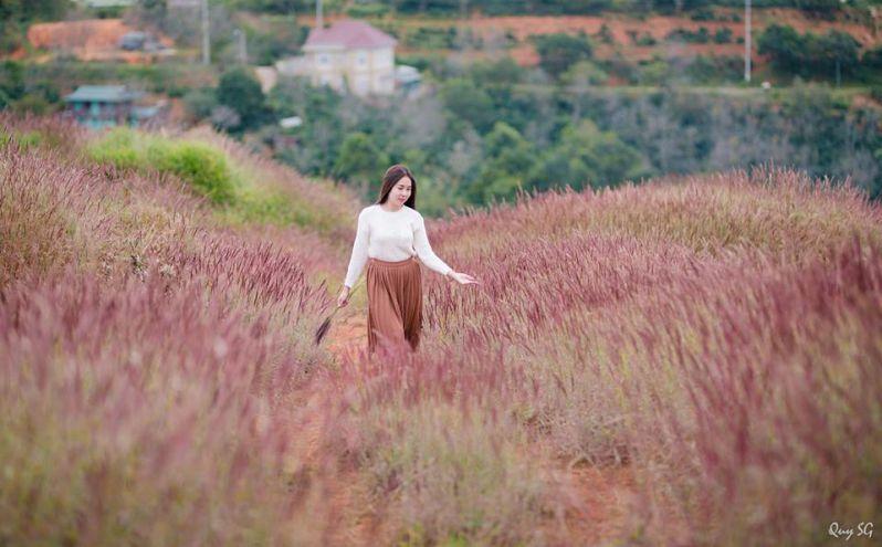 Đây chính là đồi cỏ lau hồng Đà Lạt