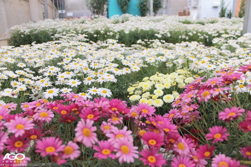 Khu du lịch Trang trại rau và hoa