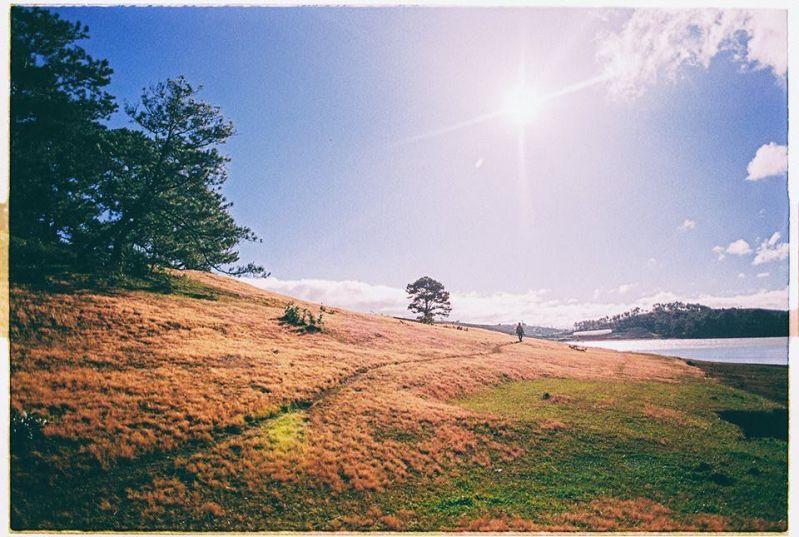 Điểm cắm trại tại đồi cỏ tuyết cây thông cô đơn