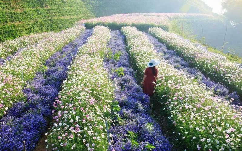 F cánh đổng hoa ở Đà Lạt