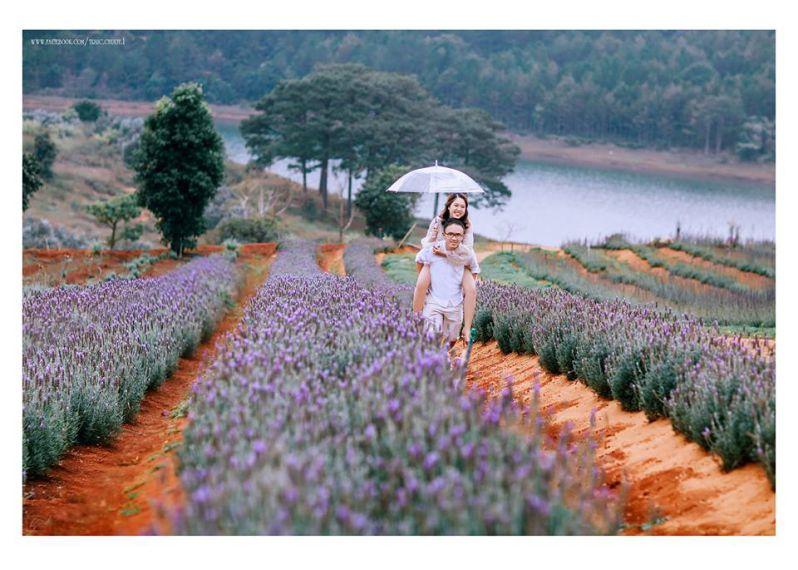 Review 2 cánh đồng hoa Lavender Đà Lạt đẹp nhất mùa này