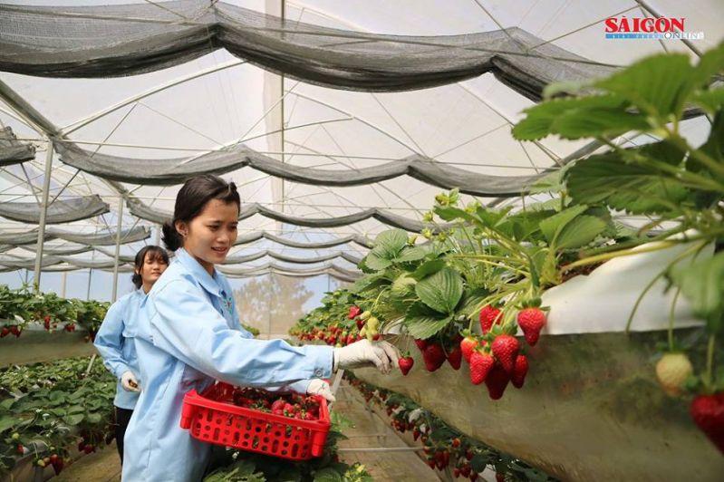 Quy định tham quan tại vườn dâu Hoa ThắngThịnh Đà Lạt