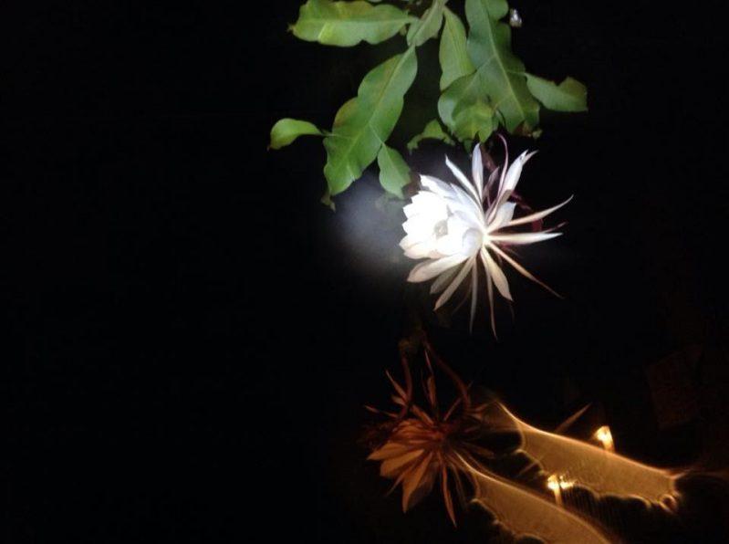Hoa Quỳnh hương ở tại Củi homestay