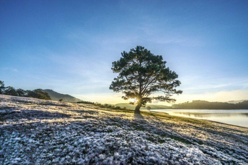 Cây thông cô đơn giữa cánh đồng tuyết trong buổi sáng bình minh bên hồ Suối Vàng ở Đà Lạt