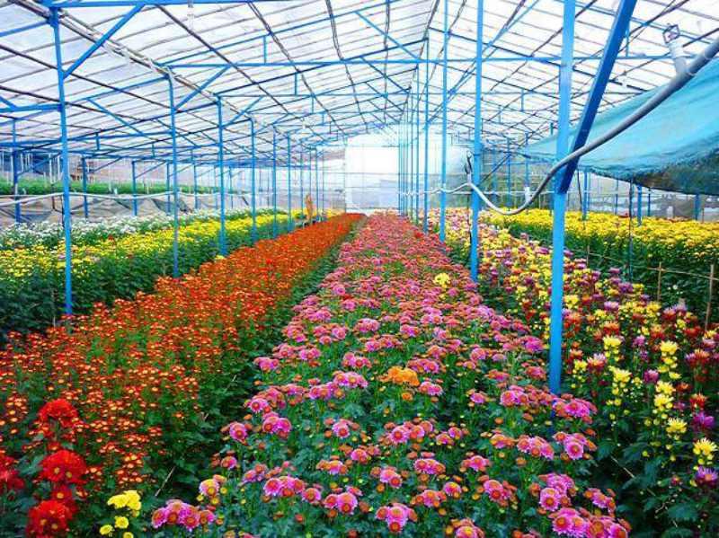 khuôn viên làng hoa Vạn Thành lung linh trong sắc hoa