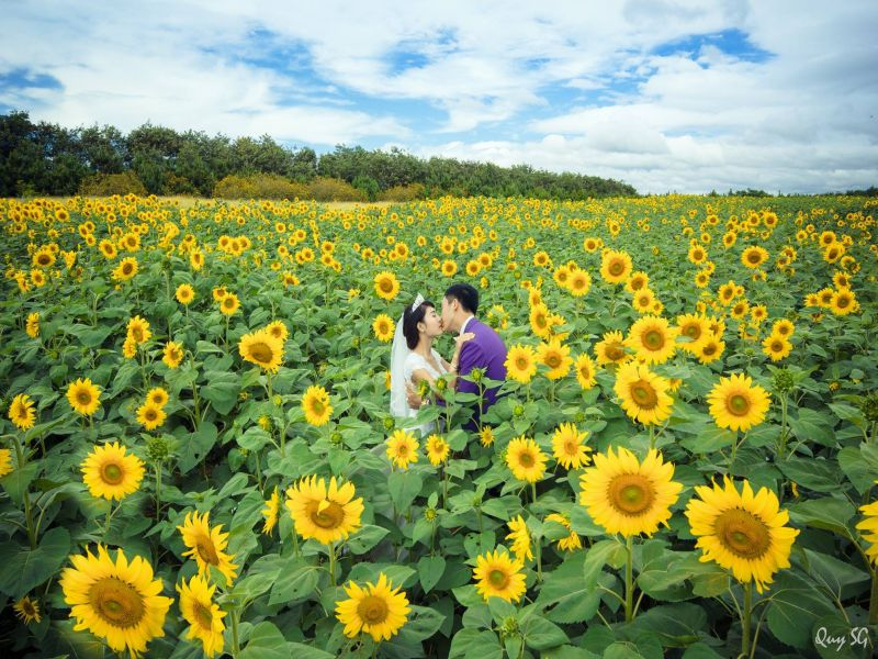 Sunflower field - Ta Nung, Dalat - 3 waterfalls daily tour
