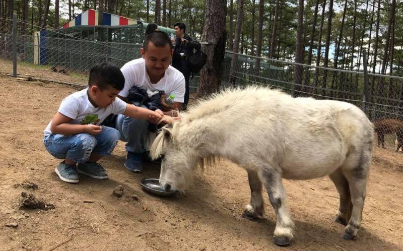 Cho thú ăn ở vườn thú Zoodoo - tour zoodoo Đà Lạt