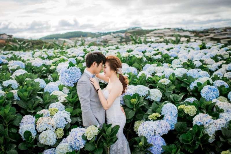 Chụp ảnh cưới Đà Lạt - đồng hoa cẩm tú cầu