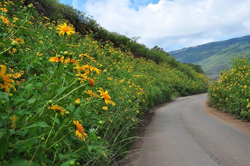 Cung đường săn hoa Dã Quỳ tại Đà Lạt tháng 9