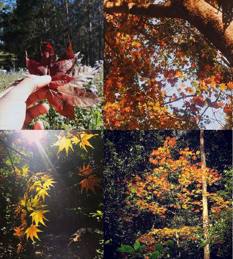Ngắm cảnh ở rừng lá phong tp Đà Lạt
