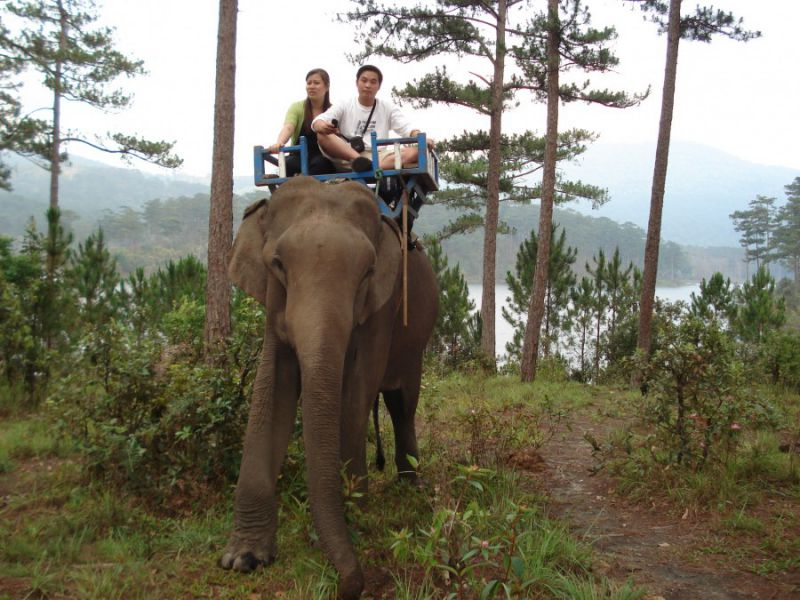 Riding elephants at Prenn resort - pongour waterfall tour
