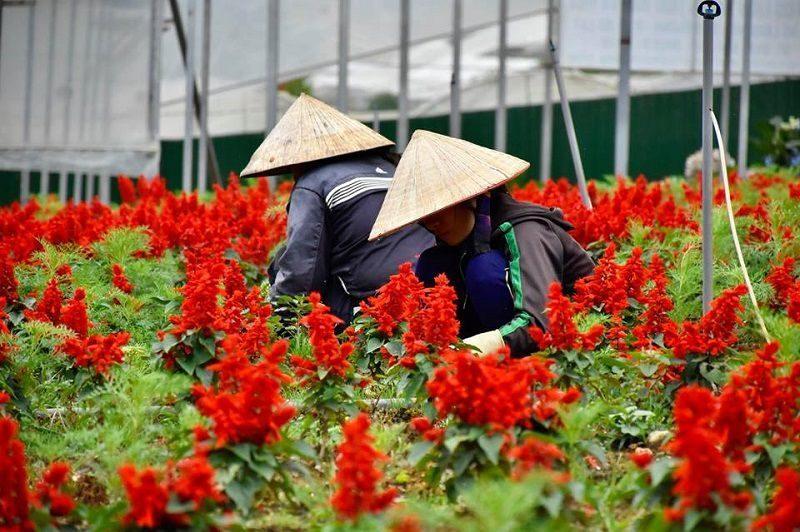 vườn hoa vạn thành ngập tràn trong sắc đỏ của các lời hoa
