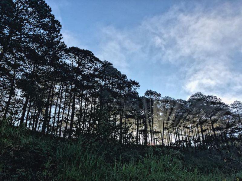 Homestay Đà Lạt ở trong rừng