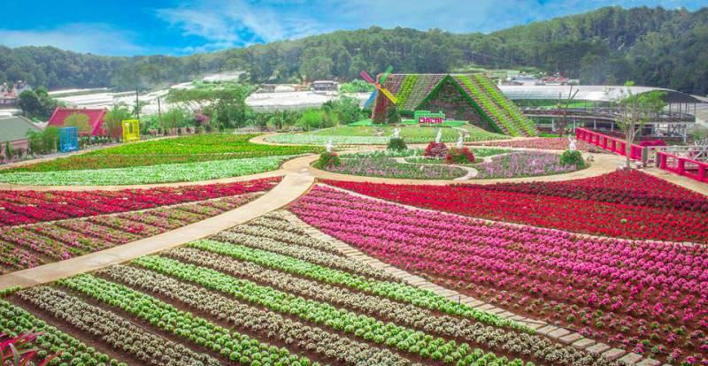 Cánh đồng đẹp đầy hoa tại Fresh Garden Đà Lạt