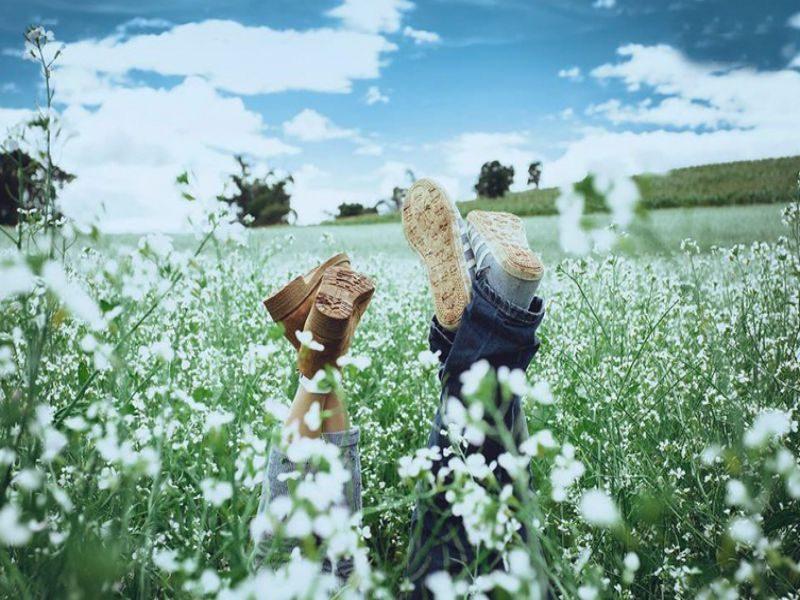 Đà Lạt tháng 5, tháng của mùa hoa Cải Trắng