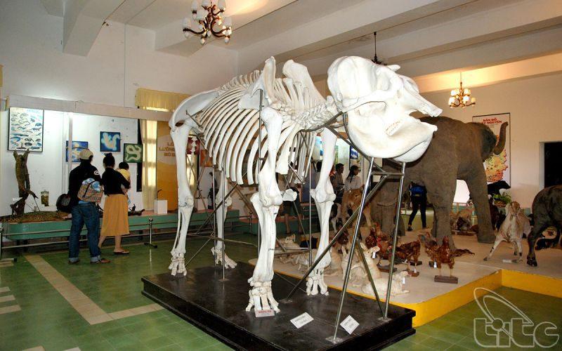 Bộ xương động vật được trưng bày trong Phân viện sinh học Đà Lạt