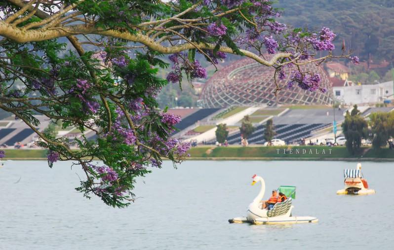 Đạp vịt tại hồ Xuân Hương