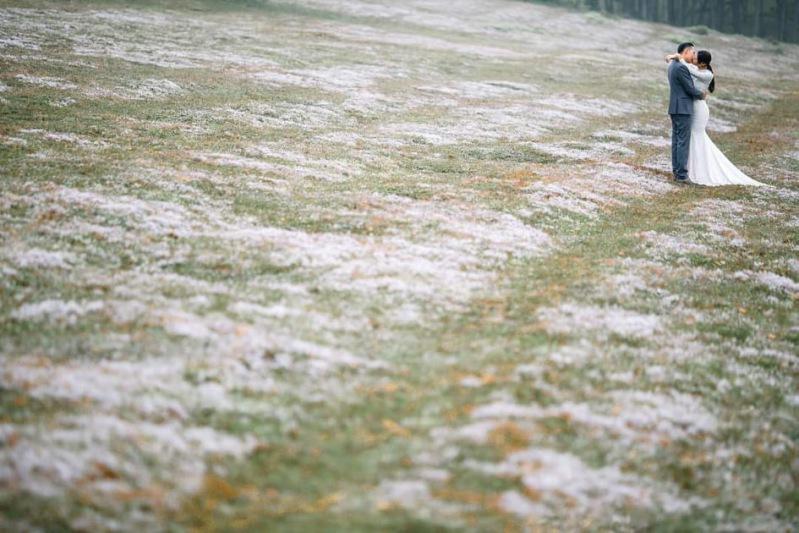 Hình ảnh đồi cỏ hồng Đà Lạt 2020