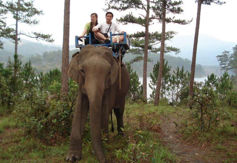 cưỡi voi đà lạt ở đâu