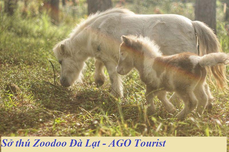 Vườn sở thú Zoodoo Đà Lạt
