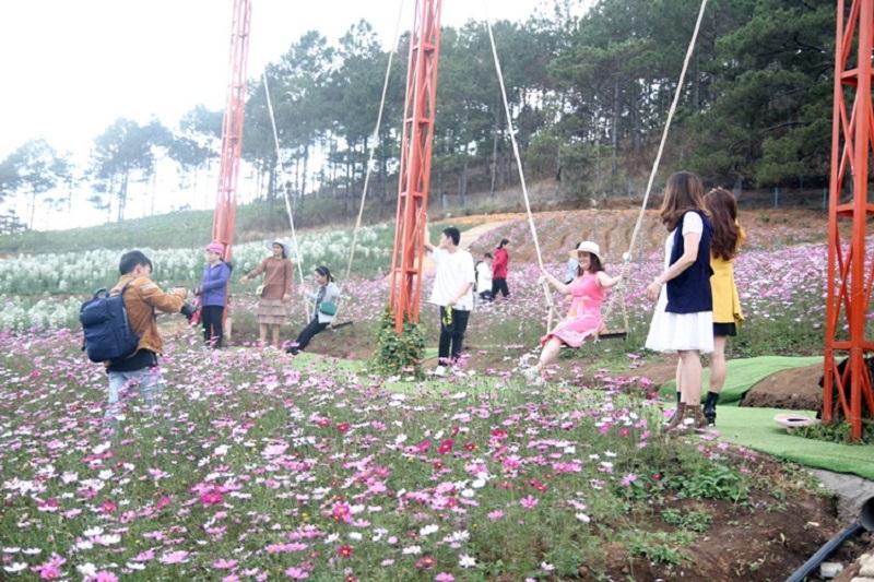 những bạn trẻ chụp hình với những cánh hoa đầy màu sắc ở vườn hoa vạn thành