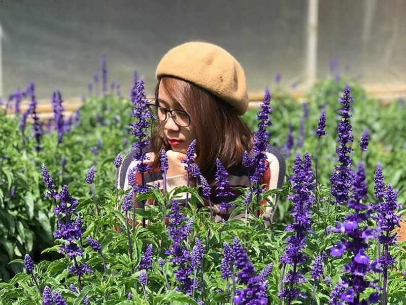 Vườn hoa vạn thành ngập tràn trong sắc tím của hoa lavender