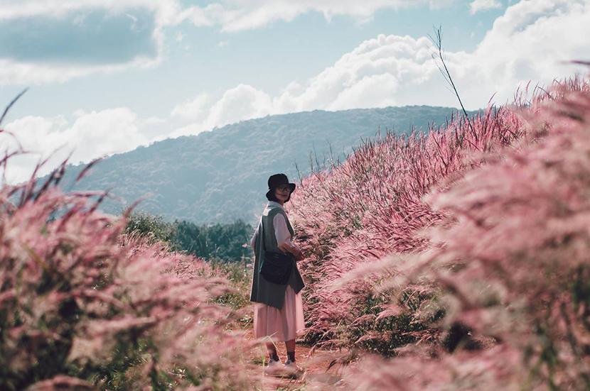 Đồi cỏ hồng ở Đà Lạt