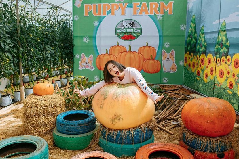 Trại chó Puppy Farm