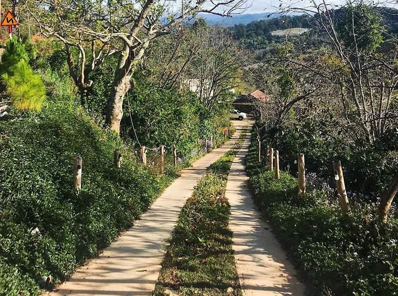 hình ảnh con đường đi vào Mộc Trà Farm Đà Lạt