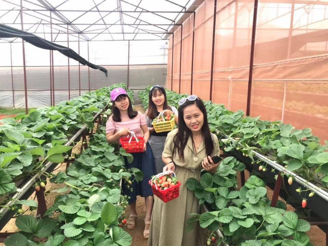 Vườn dâu tây trong chương trình tour Đà Lạt 1 ngày giá rẻ