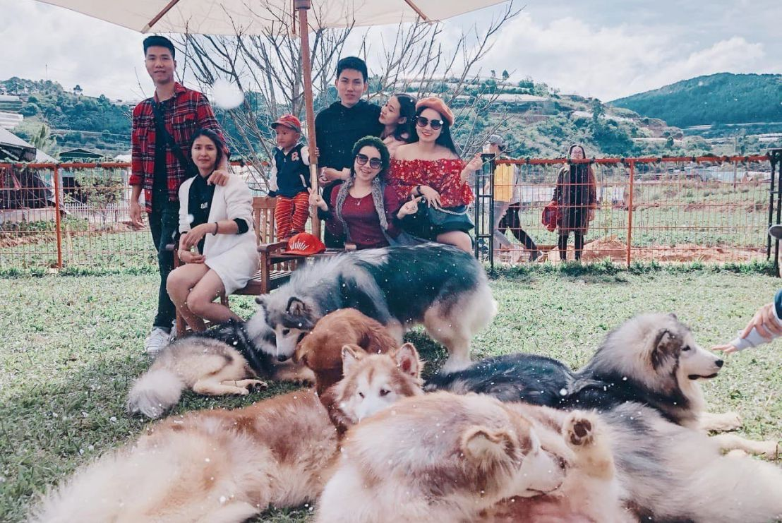 Tour 1 ngày đi trang trại cún Đà Lạt