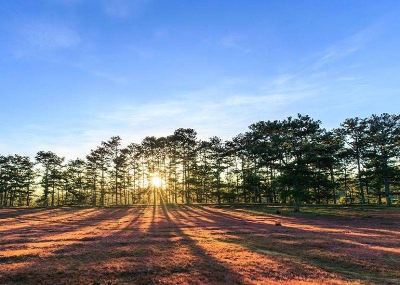 Khu rừng thông ở đồi cỏ hồng Đà Lạt lung linh trong ánh nắng hoàng hôn
