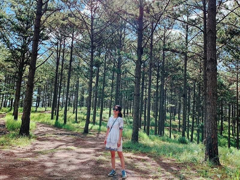 Khám phá vẽ đẹp thiên nhiên của khu rừng thông đường vào đồi chè Cầu Đất