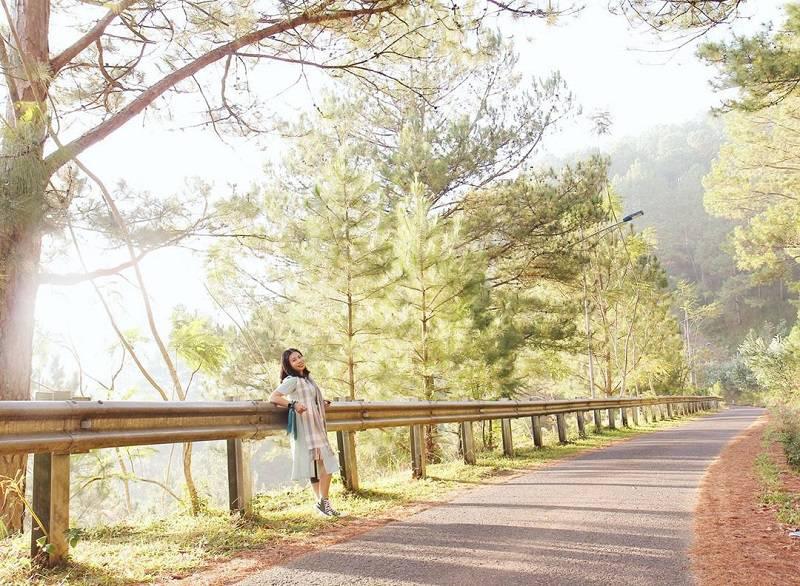 rừng thông Đà Lạt lung linh trong tia nắng bình mình