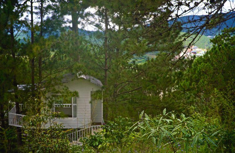 Không gian khuôn viên ở Pine Hill homestay Đà Lạt