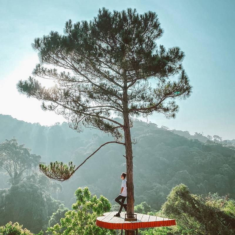 Gốc thông cô đơn hình trái tim ở Hoa Sơn Điền Trang
