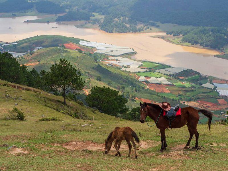 Ngắm nhìn suối vàng từ đỉnh LangBiang