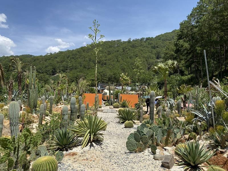 Khu vườn xương rồng Kombi Land Đà Lạt