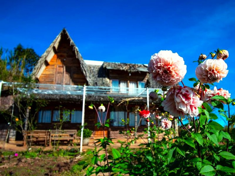 Homestay nhà gổ, lãng mạn và ấm cúng tại Bình Yên house